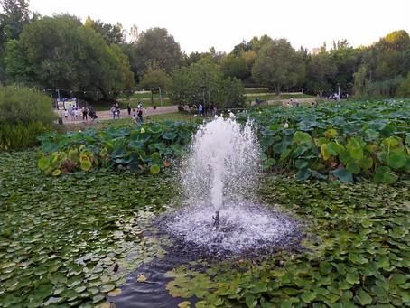 Jerusalem Botanical Gardens: An Online Activity for 'Tu Bishvat'