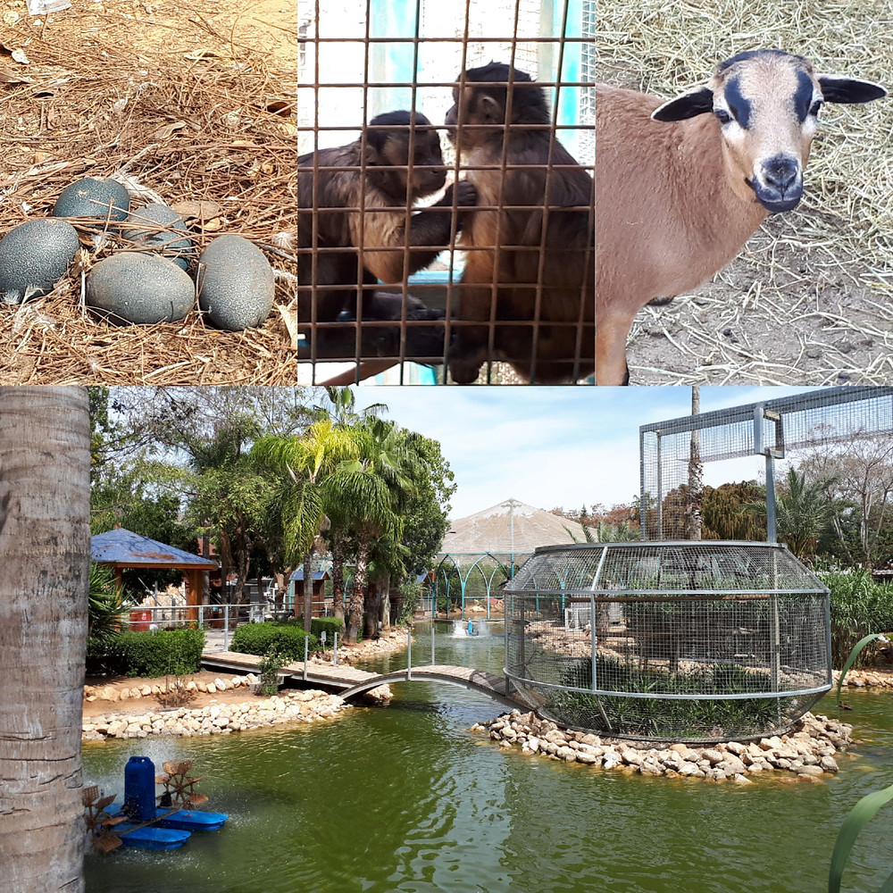 Petach Tikva Animal Park
