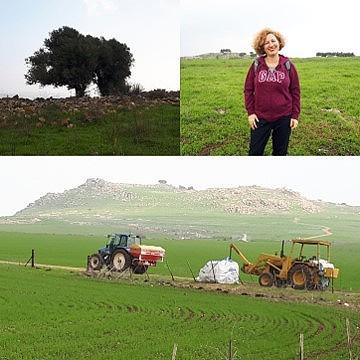 Karnei Hittin near Kibbutz Lavi