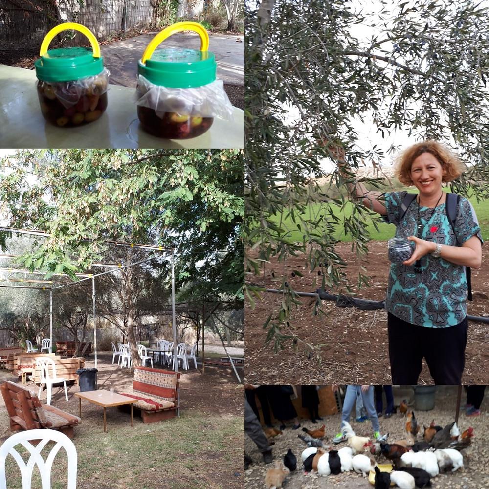 Aladdin Olive Farm, Kfar Rut