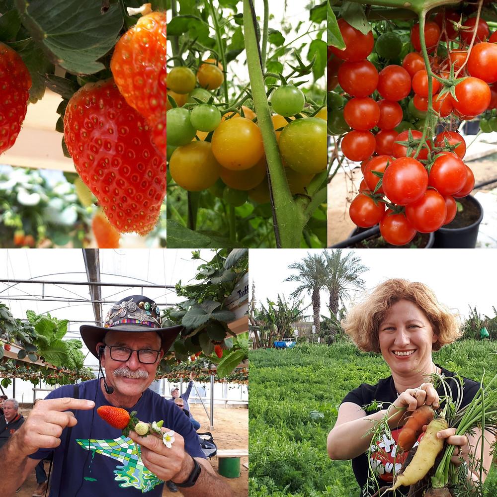 Salad Trail Welcome, Talmei Yosef