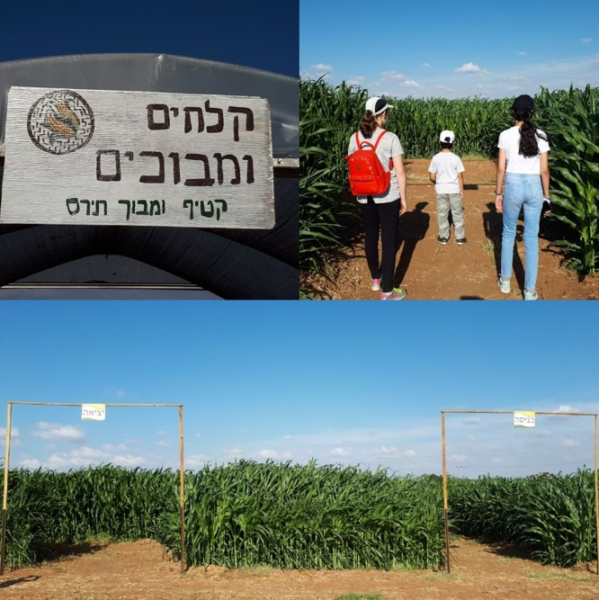 'Klahim Umevohim' Corn Maze and Picking Hod Hasharon