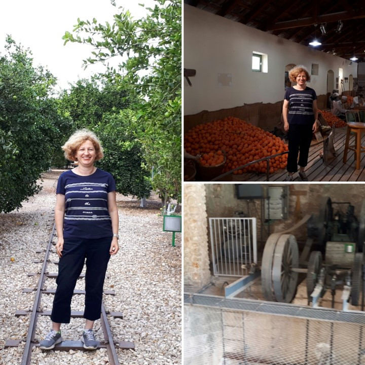 The Minkov Citrus Orchard Museum