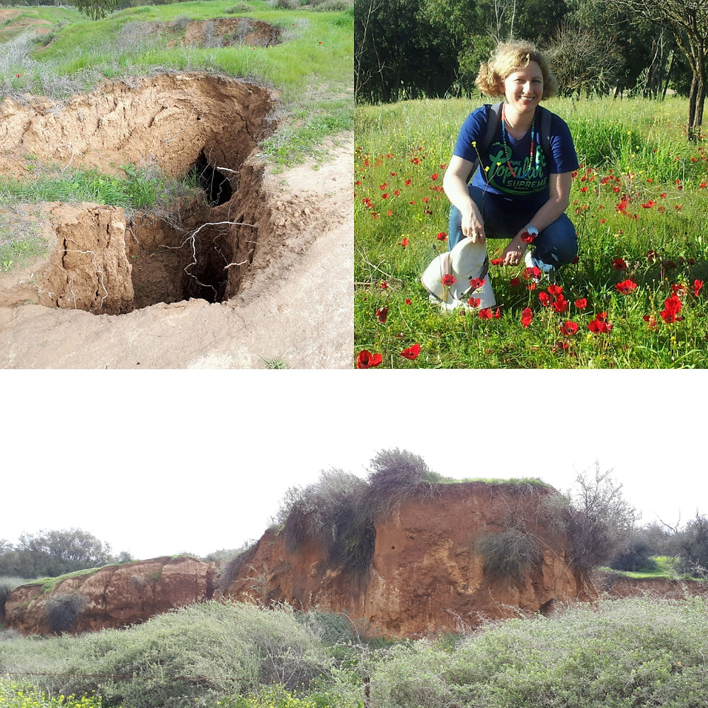 Kibbutz Ruchama Badlands and Anemones