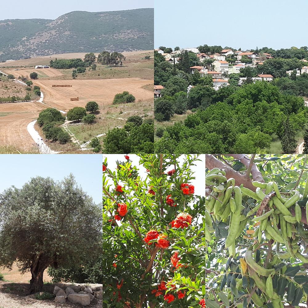 Beit Shearim View