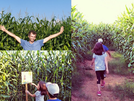 Hod Hasharon: A Seasonal Field Trip