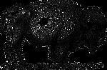 bison-38130_640.png