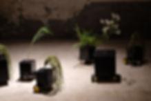 도망치는 꽃 2세대_1.JPG