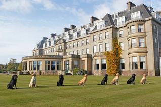 Gleneagles Hotel & Gun Dogs