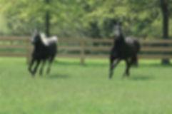 WildGooseFarm-Horses.jpg