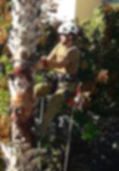 ניקוי דקל וושינגטוניה בטיפוס