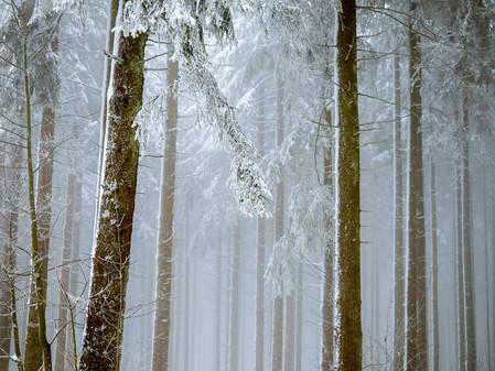 Winter's Role