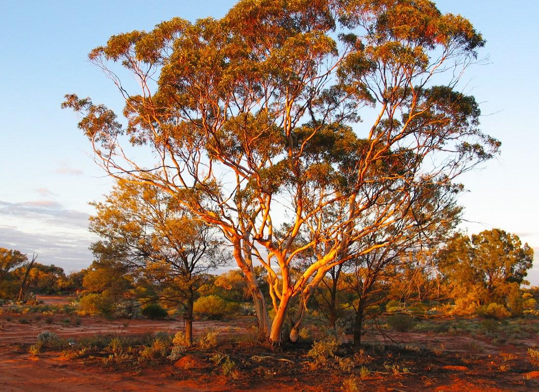 Majority Aboriginal Owned