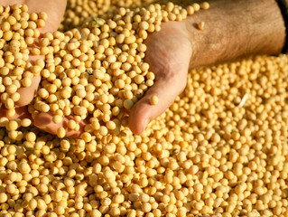 A importância da climatização no armazenamento de Sementes e Grãos (Agronegócio)