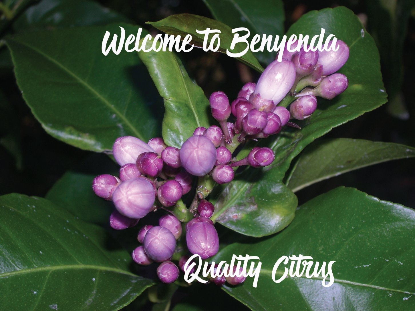Welcome to Benyenda