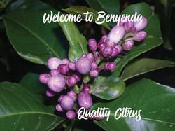 Welcome to Benyenda