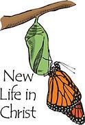 New-Life.jpg
