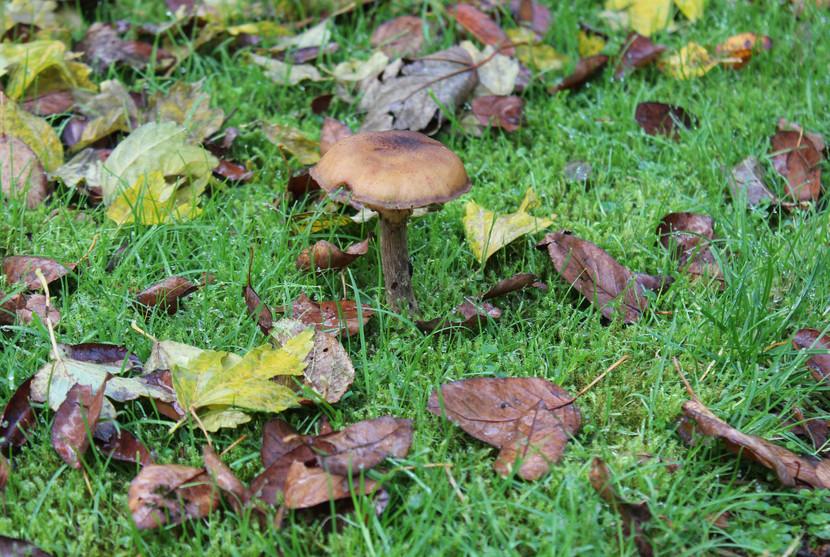 Ze zijn er weer... de paddenstoelen