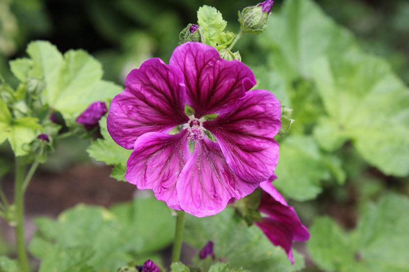 De eerste zomerbloemen