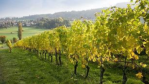 vinho-verde.jpg