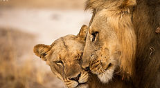 Time + Tide South Luangwa Wildlife 11 -