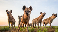 Time + Tide King Lewanika - Will Burrard