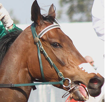 On Nasal Strips (and tongue ties) in racehorses....