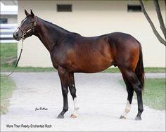 Verrazano on the Kentucky Derby trail