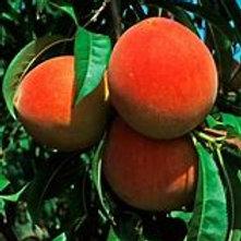 Crest Haven Peach Tree