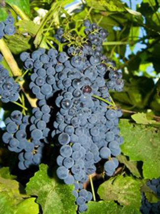 Blueberry Grape