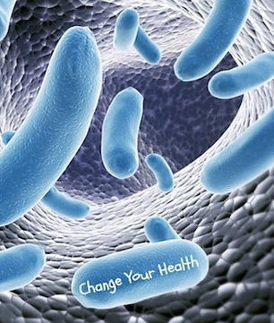 Gut-Bacteria-Health.jpg