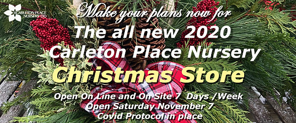 2020 christmas shop.jpg