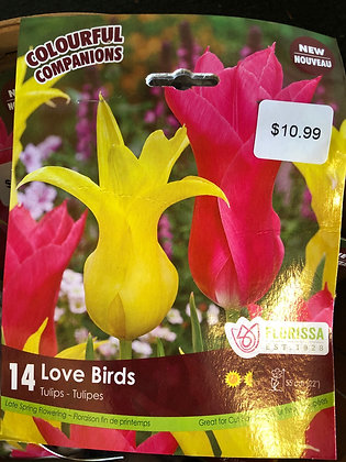 Mixed Tulips - Love Birds