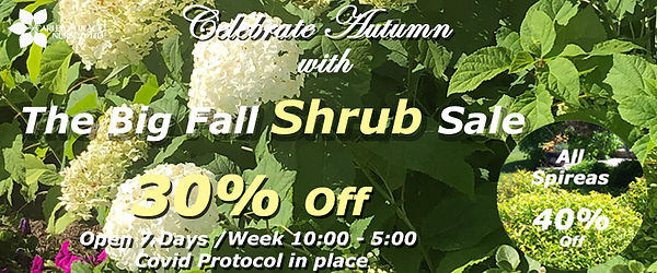 fall 2020 shrubs.jpg