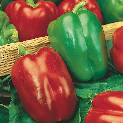 Pepper California  -  Aimers Seed