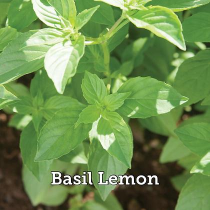"""Herb Basil Lemon 4"""" Pot"""