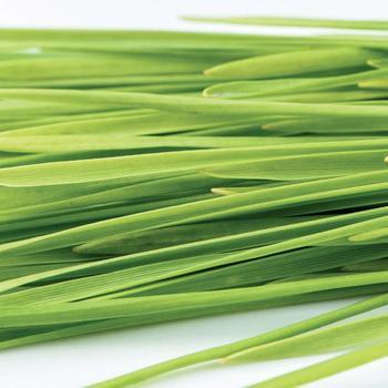 Sprouts Wheatgrass -  McKenzie Organic