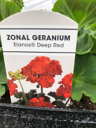 """Geranium - 4 1/2"""" Pot - Select Variety"""