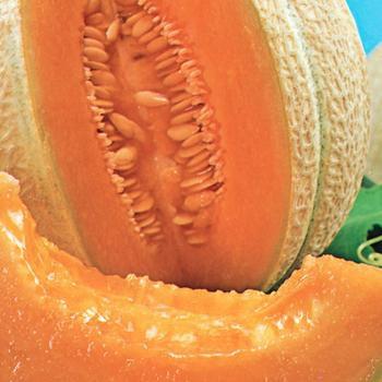 Canteloupe -  McKenzie  Organic