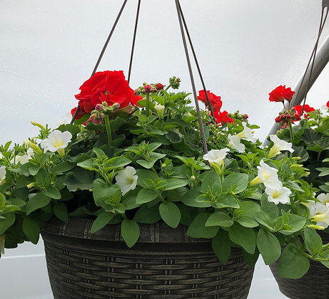 "Hanging Basket 13"" (Please indicate preferences)"