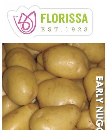 Seed Potatoes - Yukon Gold - 2 kg