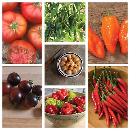 "Pepper -Gourmet 4"" - Select Variety"