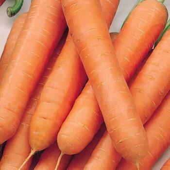 Carrot  NantesTouchon- McKenzie