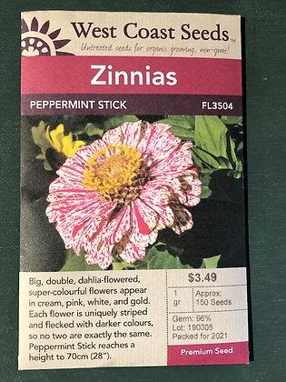 Zinnia Peppermint Stick - West Coast Seed