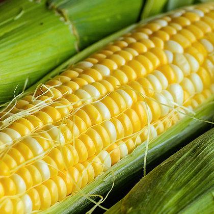 Corn Luscious   -  Aimers Seed