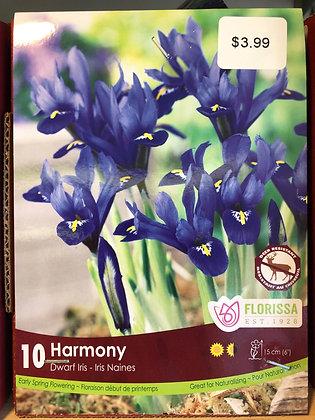 Dwarf Iris - Harmony