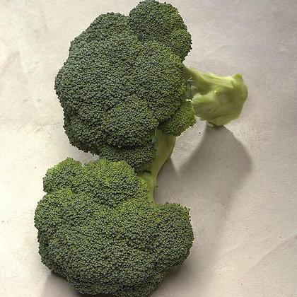 Broccoli - 6 Pack - Select Variety