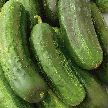 Cucumber National Pickling-McKenzie Seedtape Organic