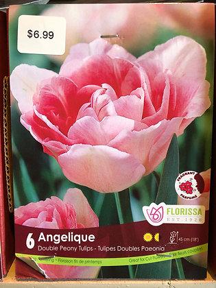 Tulip - Angelique