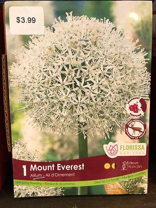Allium - Mount Everest